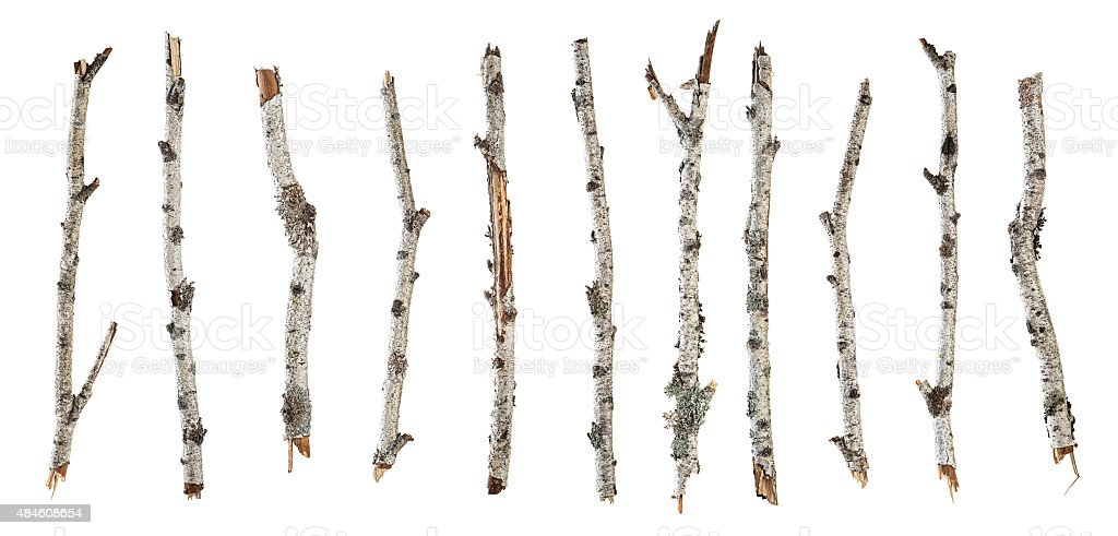Collection dry branches birch isolated on white stock photo