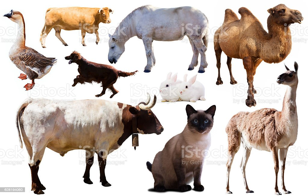 collection farm animals stock photo