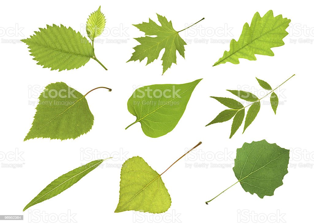 Collection  leaves stock photo