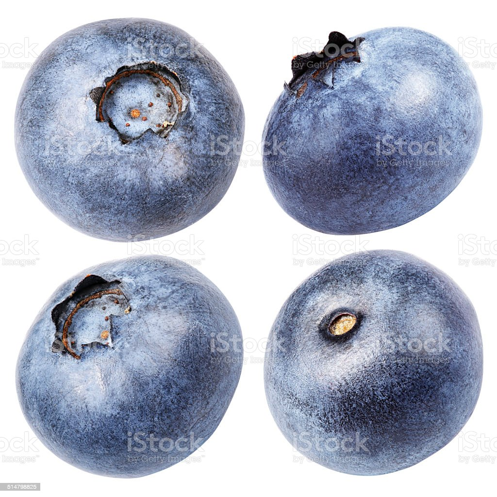 Collection of blueberry berry isolated on white stock photo