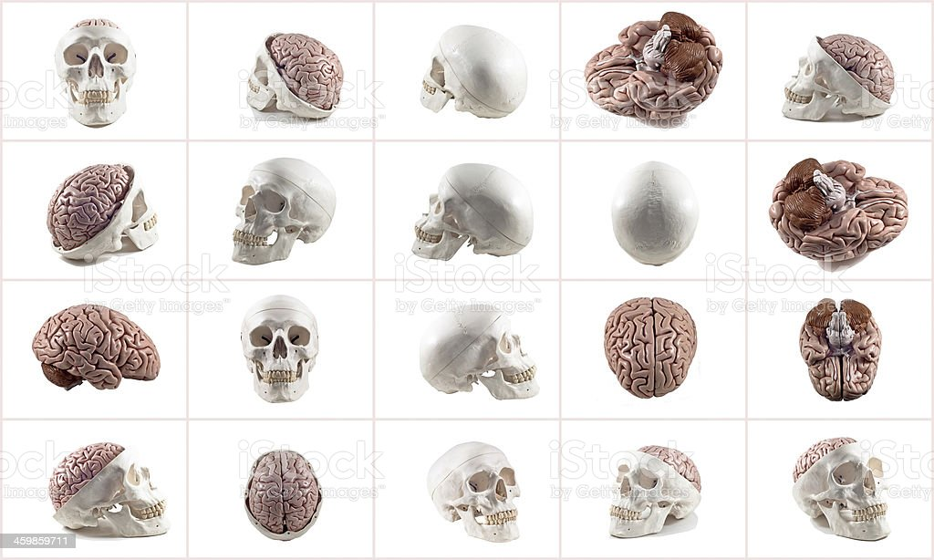 Collection of brain and skull isolated stock photo