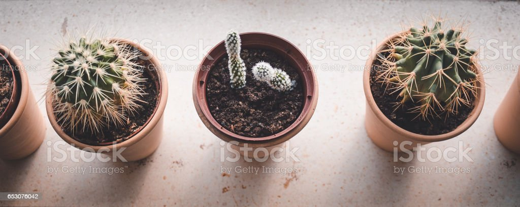 Collection of cactuses, on windowsill view from the top stock photo