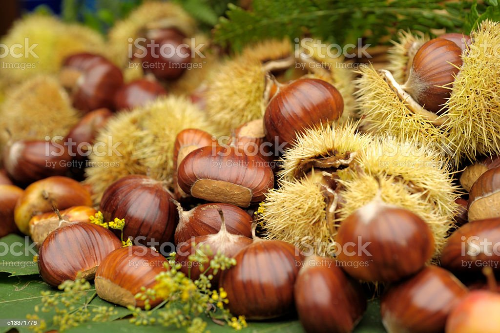 collection of chestnuts in autumn stock photo