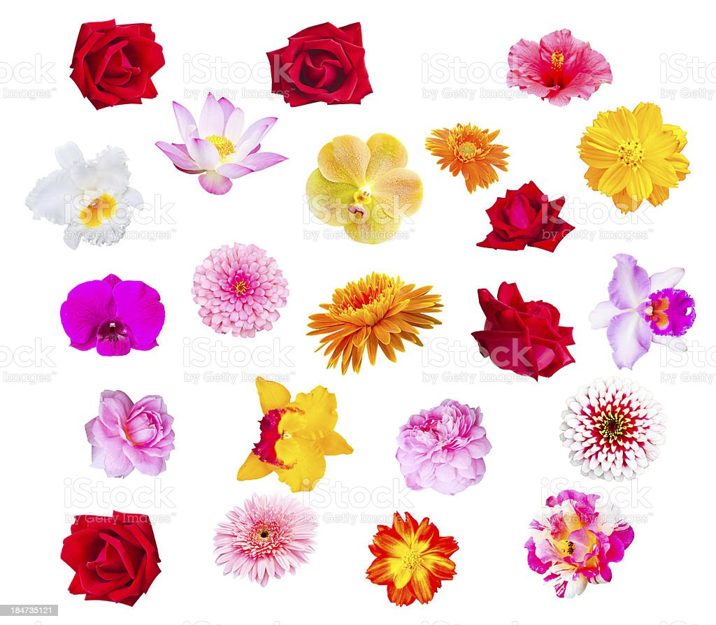 collection of colorful head flower, fresh and natural royalty-free stock photo