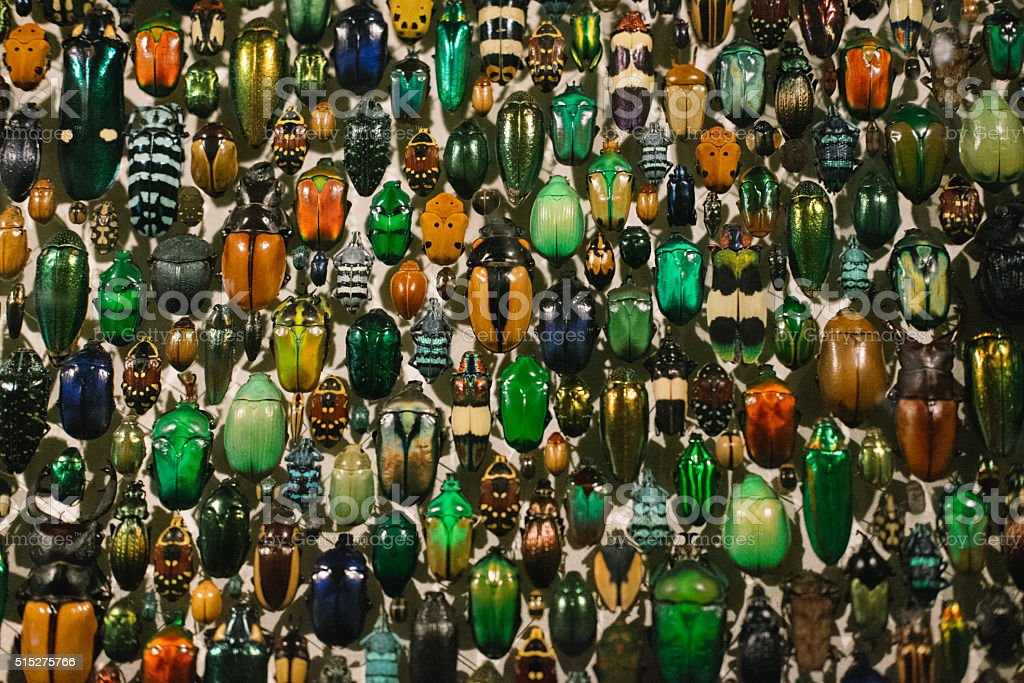 Collection of colourful insects stock photo