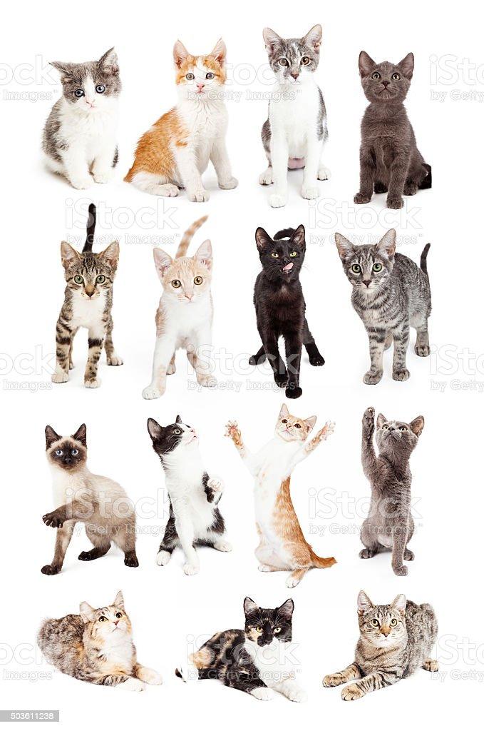 Collection of Cute Kitten Photos stock photo
