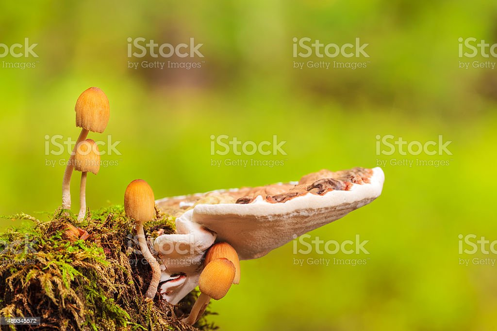 Collection of different mushrooms in Dutch national park The Vel stock photo