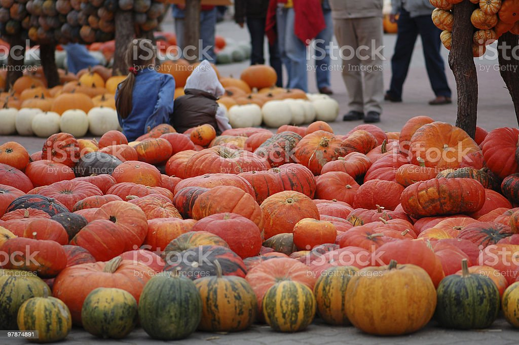collection of different pumpkins stock photo