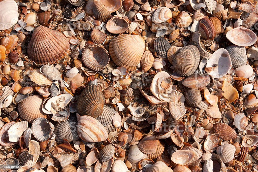 Collection of different Shells on the beach stock photo