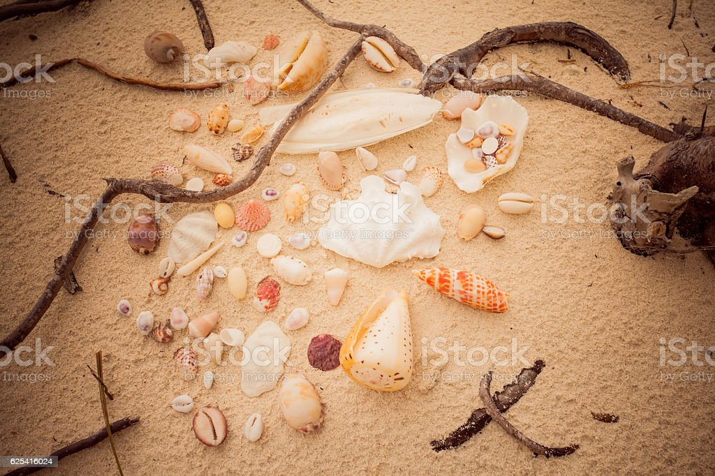 collection of different shells on white sandy beach stock photo