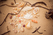 collection of different shells on white sandy beach
