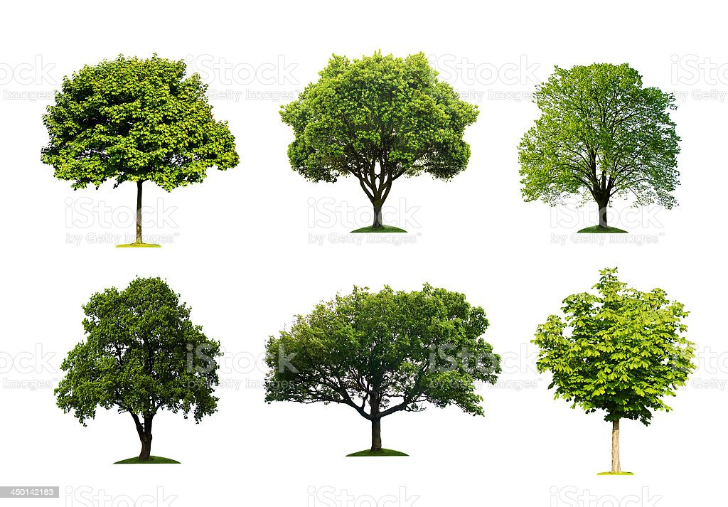 A collection of different trees on a white background stock photo