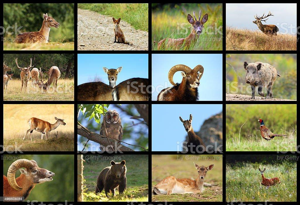 collection of european wildlife stock photo