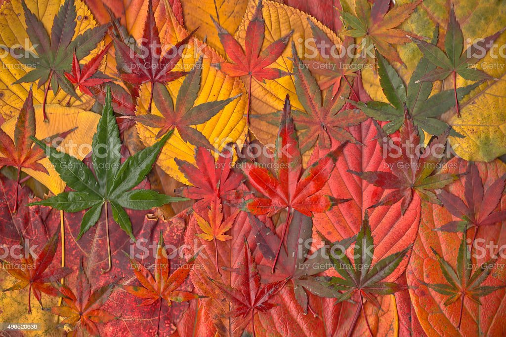Collection of fallen leaves stock photo