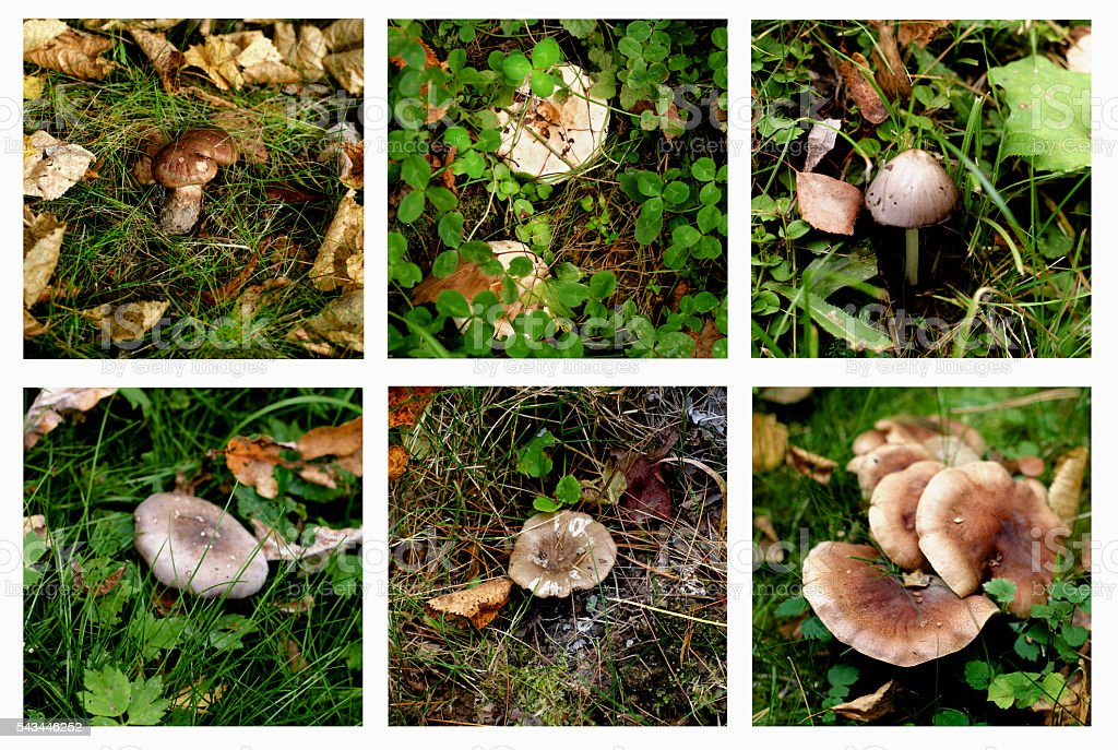 Collection of Forest Mushrooms stock photo