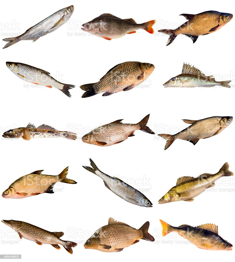 Collection of fresh water fish stock photo