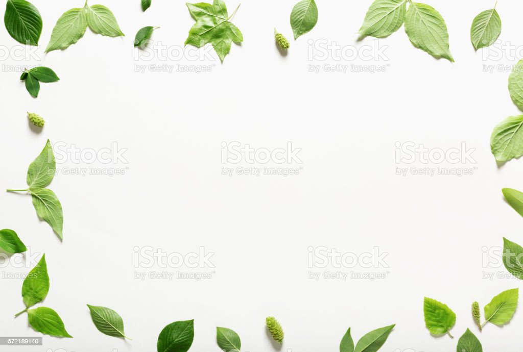 Collection of green leaves top view stock photo