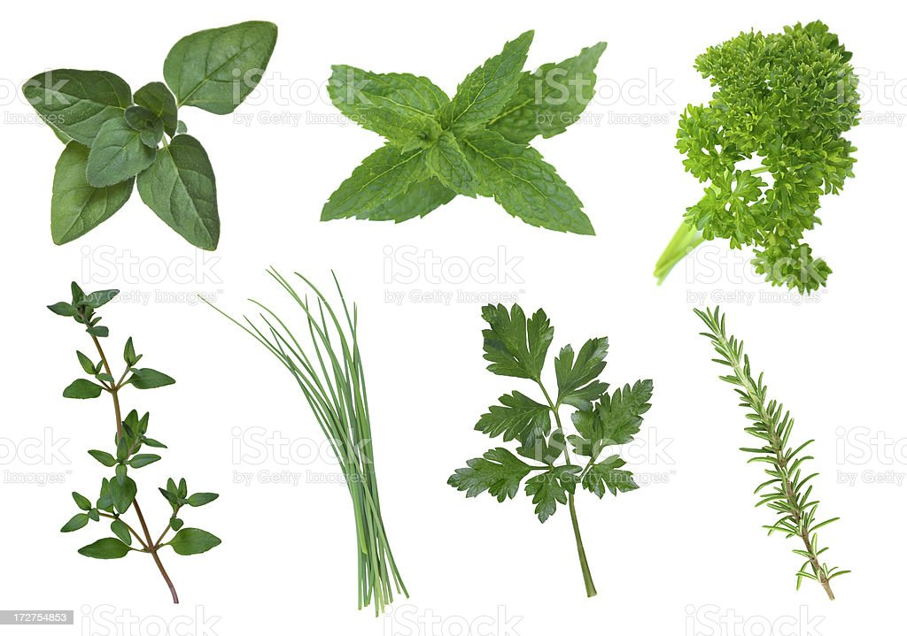 Collection of herbs royalty-free stock photo