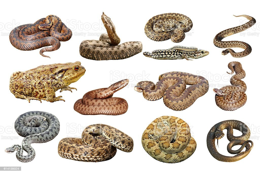 collection of herpetofauna over white stock photo
