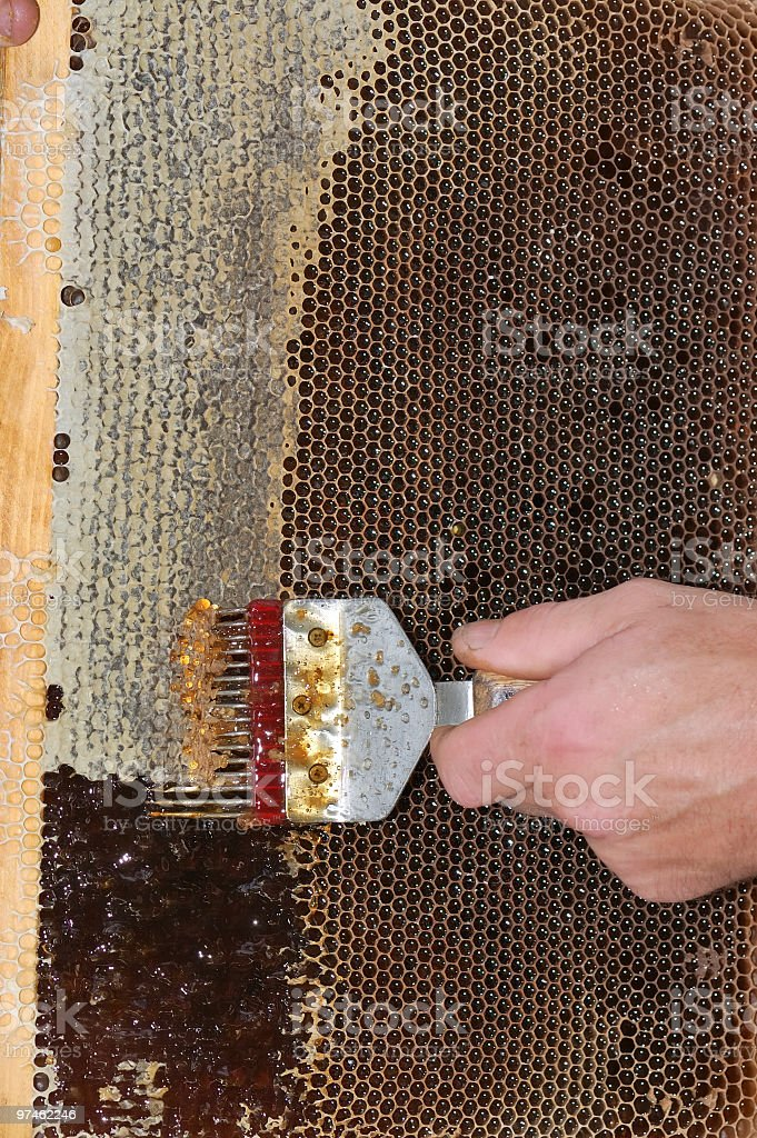 Collection of honey stock photo