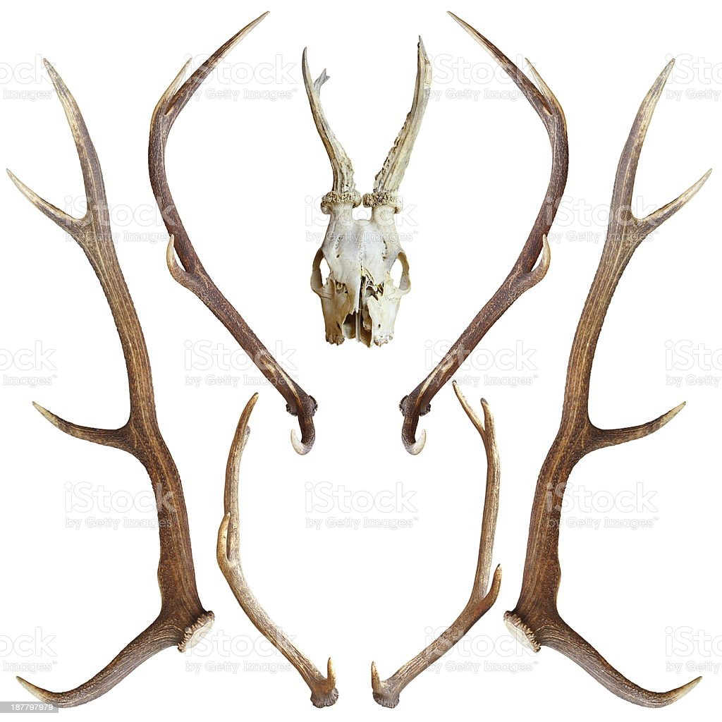 collection of hunting trophies stock photo