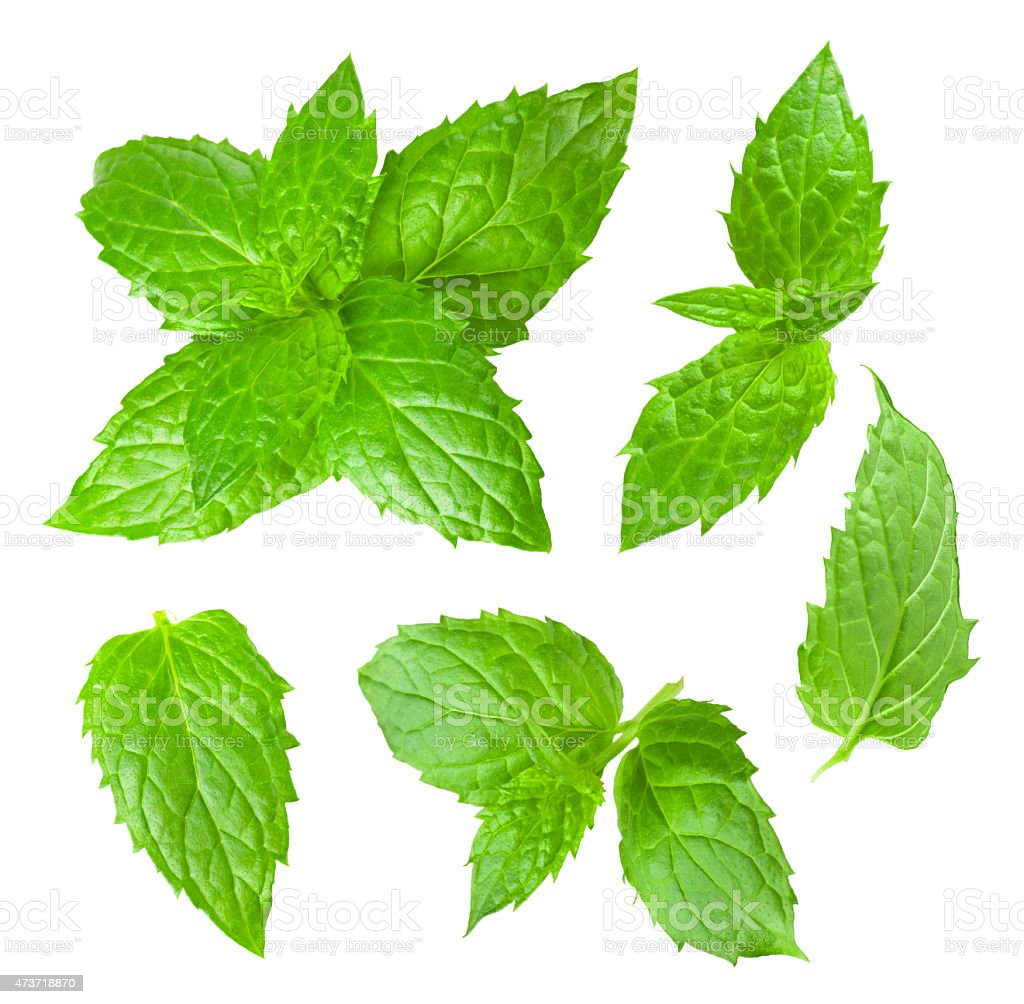 Collection of mint leaves isolated on white background stock photo
