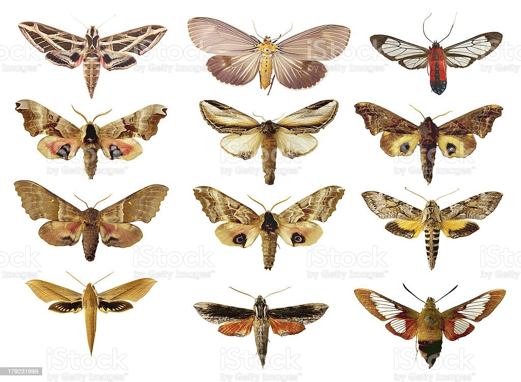 collection of red butterflies, moths on a white background royalty-free stock photo