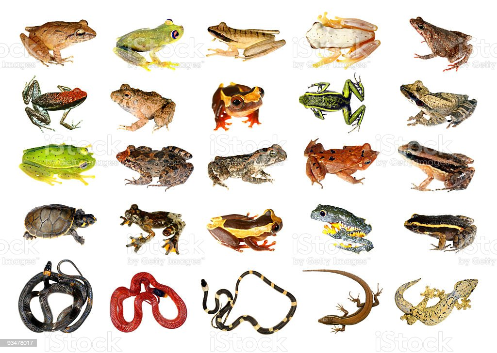 Collection of reptiles and amphibians from the Amazon rainforest stock photo