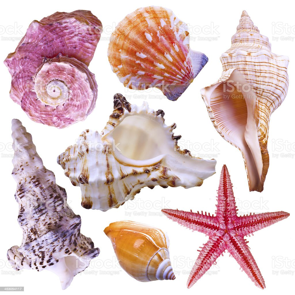 Collection of sea shells stock photo