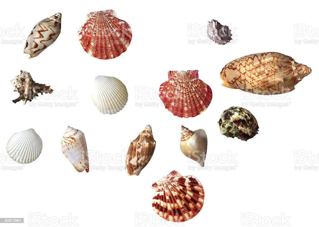Collection of Sea shells royalty-free stock photo