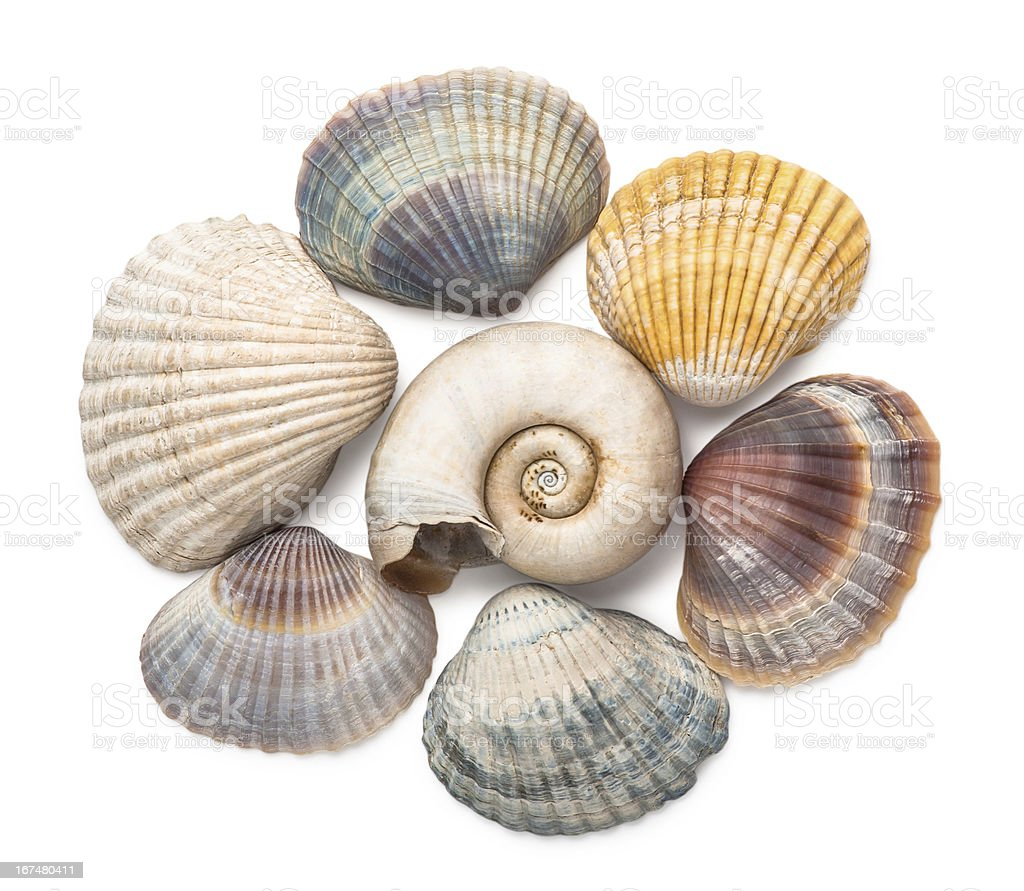 Collection of seashells royalty-free stock photo