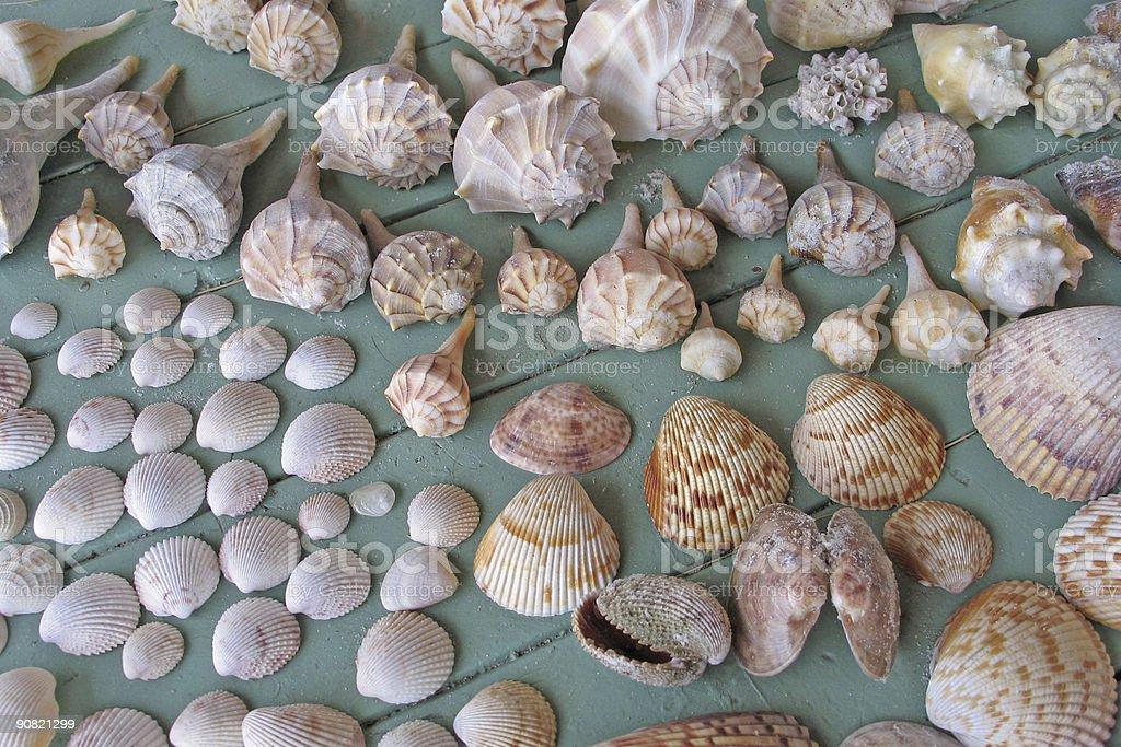 Collection of seashells stock photo