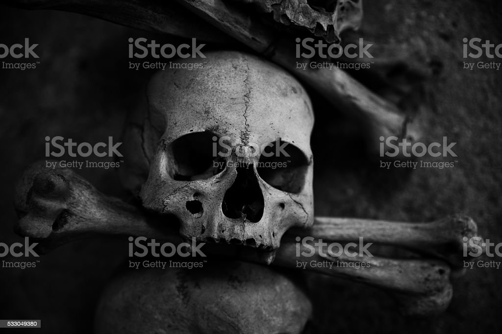 collection of skull and bones stock photo