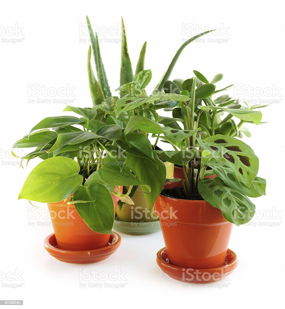 A collection of small house plants royalty free stock photo