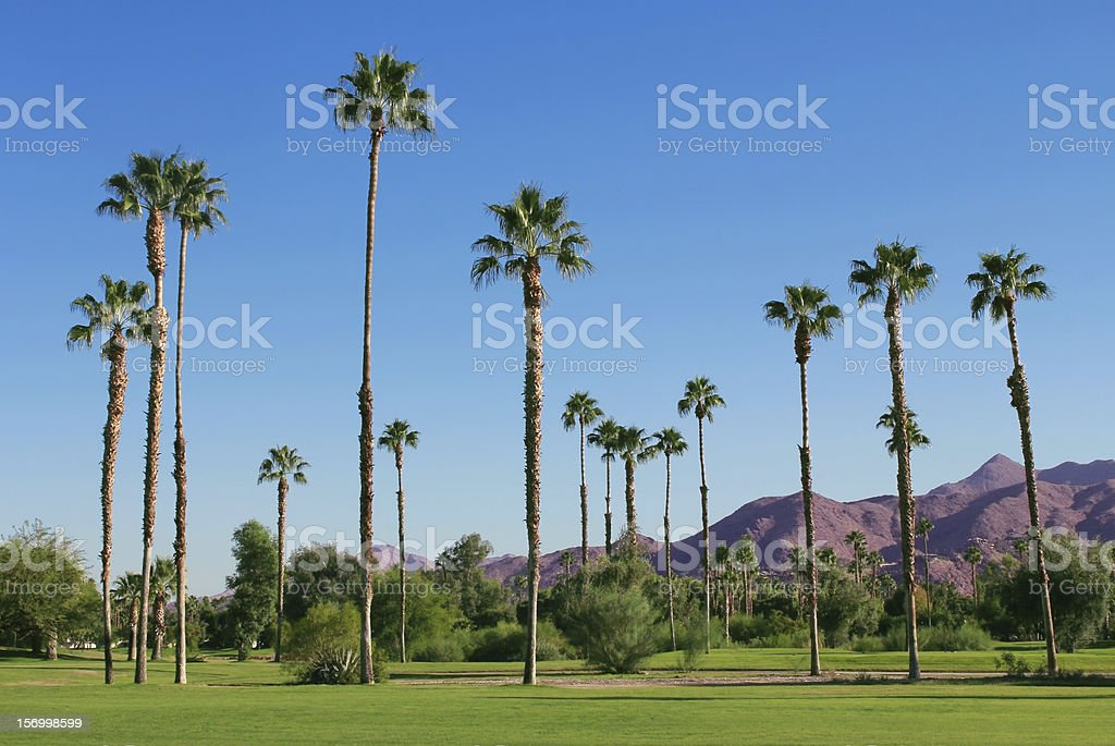 A collection of tall palm style trees and tropical landscape stock photo