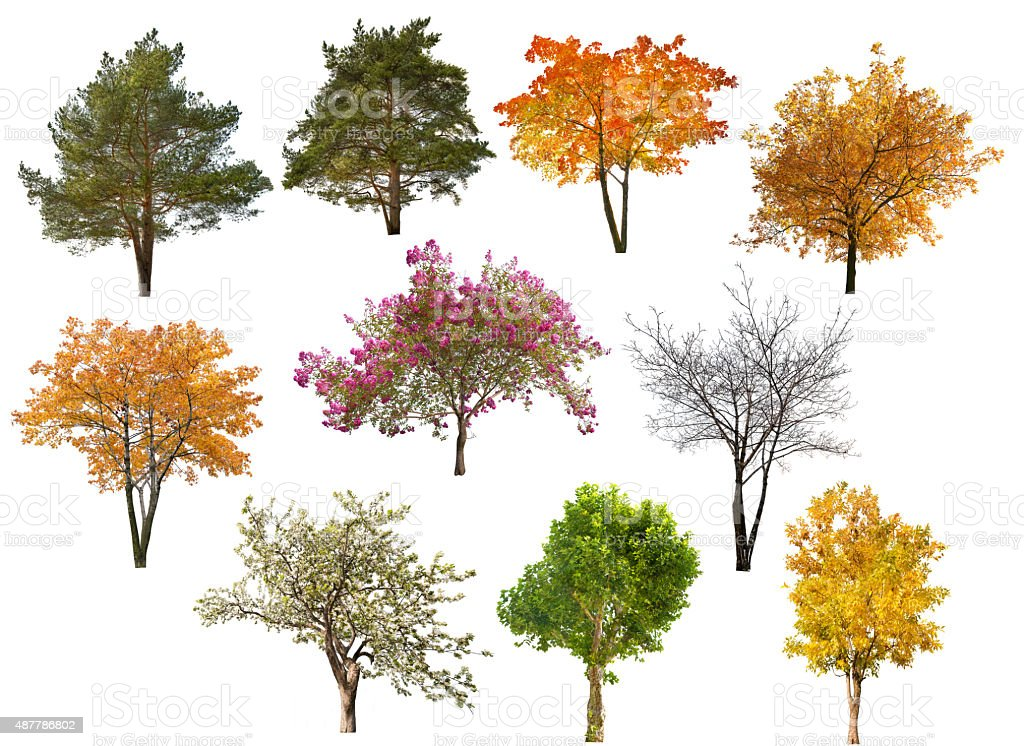 collection of ten isolated trees stock photo