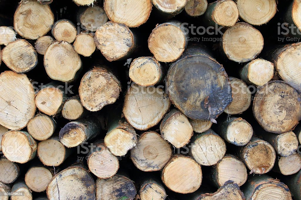 Collection of tree trunks stock photo