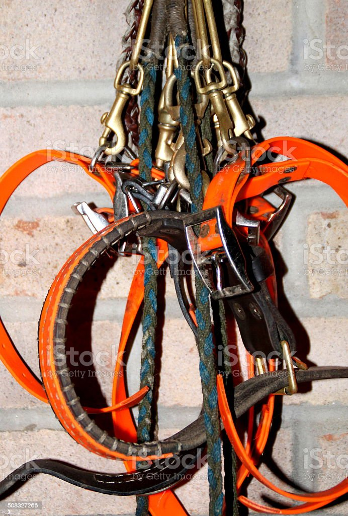 Collection sporting dog collars hanging by brick wall brass clips stock photo