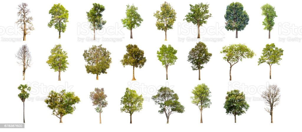 collections green tree isolated. green tree  isolated on white background. stock photo