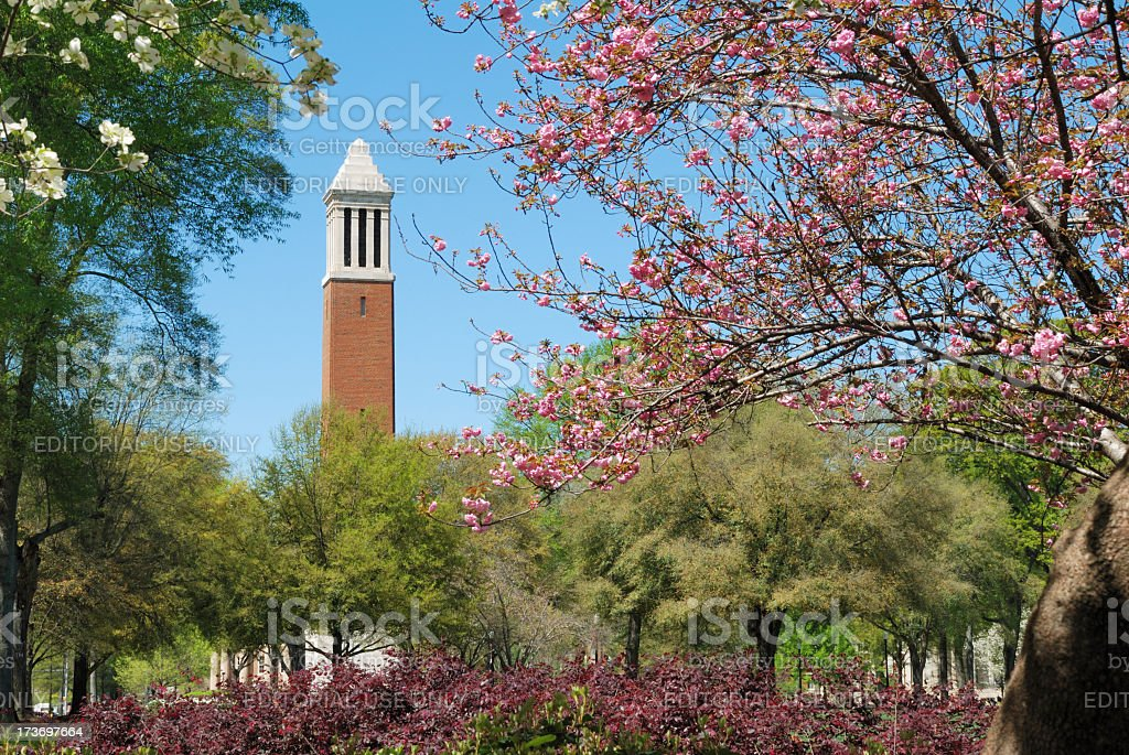 A college campus in the spring surrounded by blooming trees stock photo