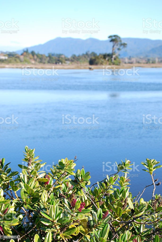 Collingwood Estuary with Hebe Plant in Foreground stock photo
