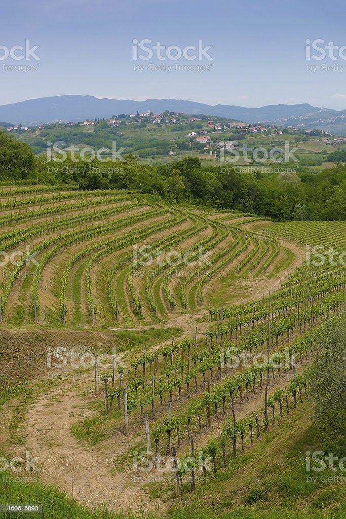 Collio vineyards stock photo