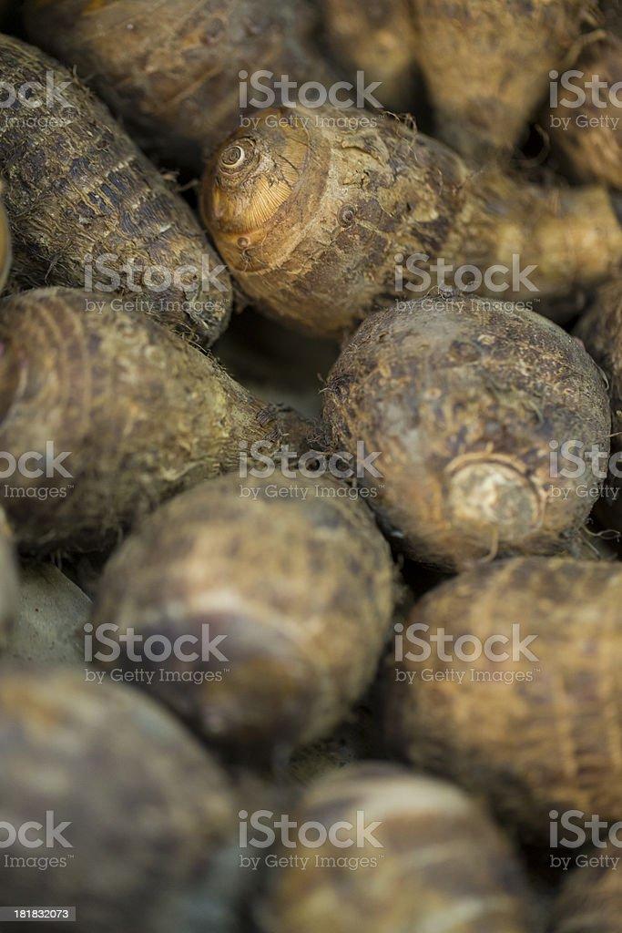 Colocasia, or Taro Root royalty-free stock photo