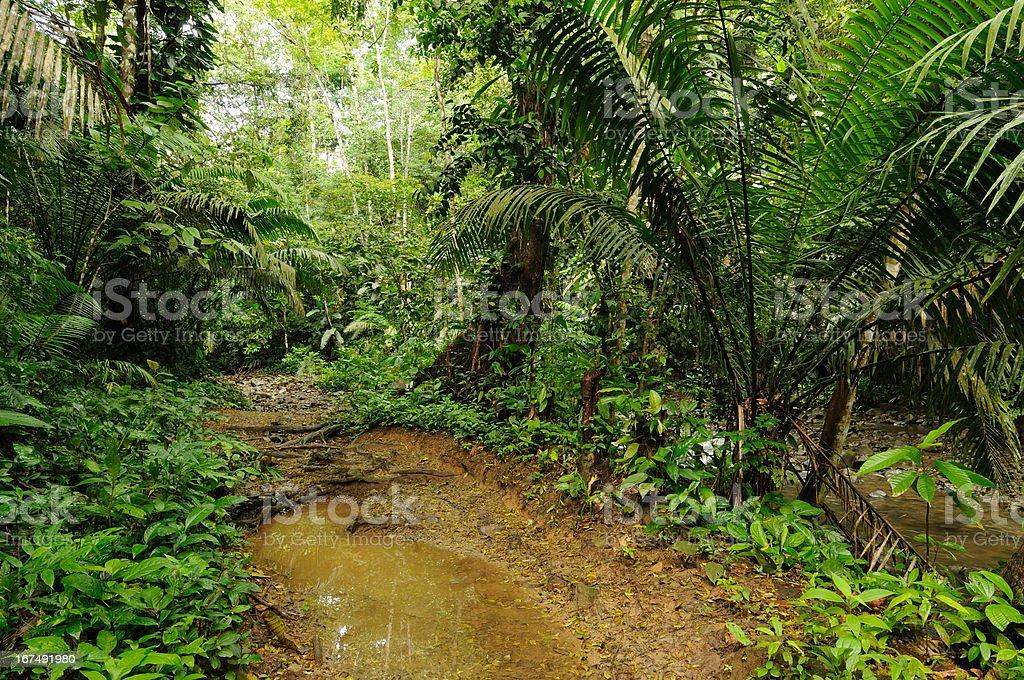 Colombia, Darien jungle royalty-free stock photo