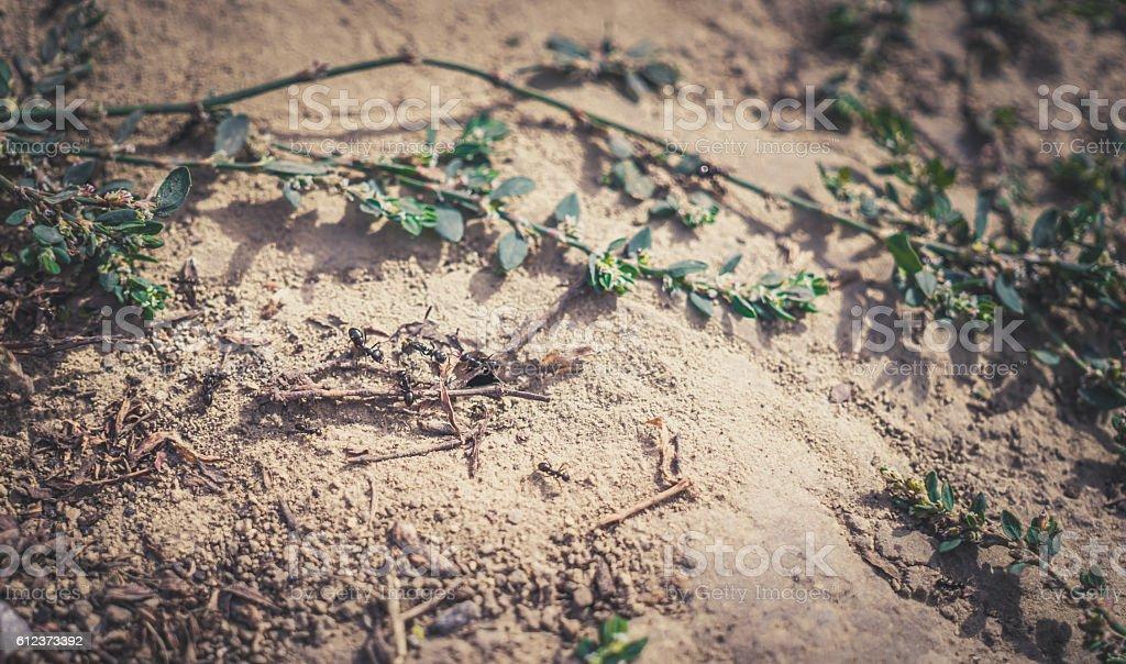 Colony of black ants stock photo