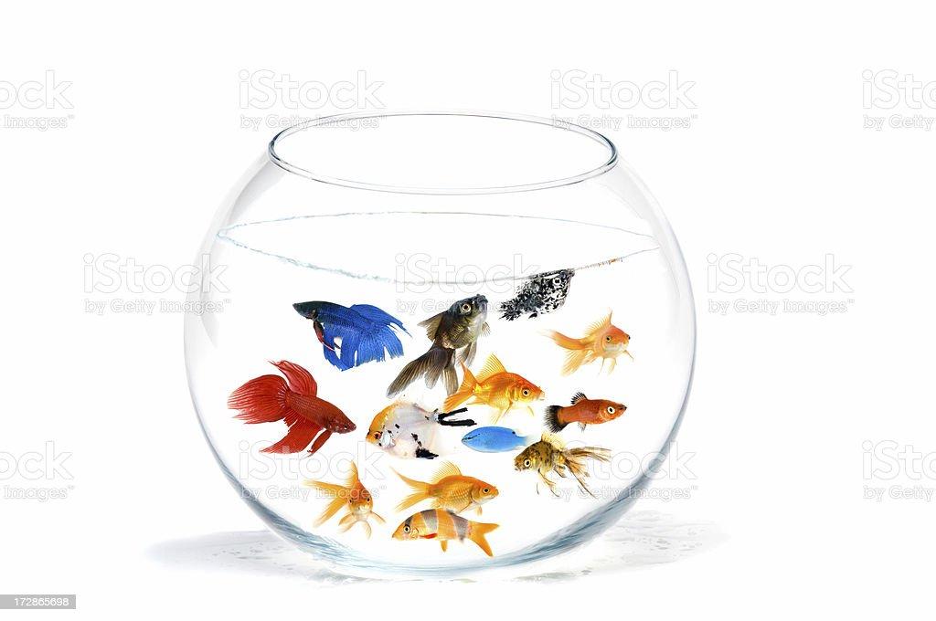 color aquarium royalty-free stock photo