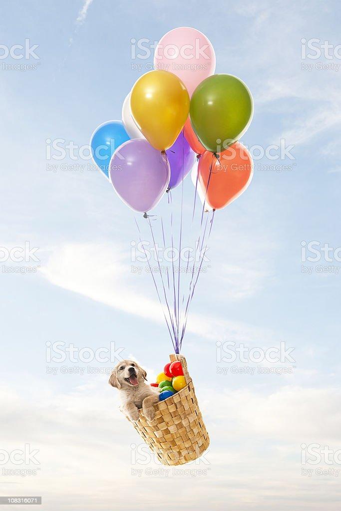 color ballons stock photo