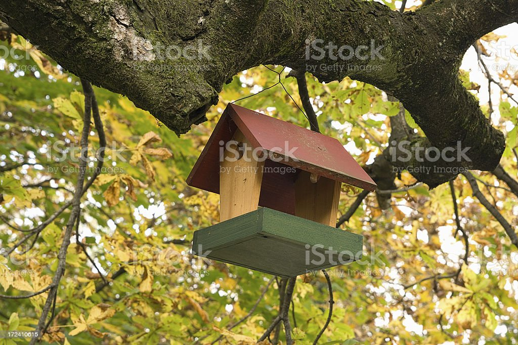 Color bird small house royalty-free stock photo