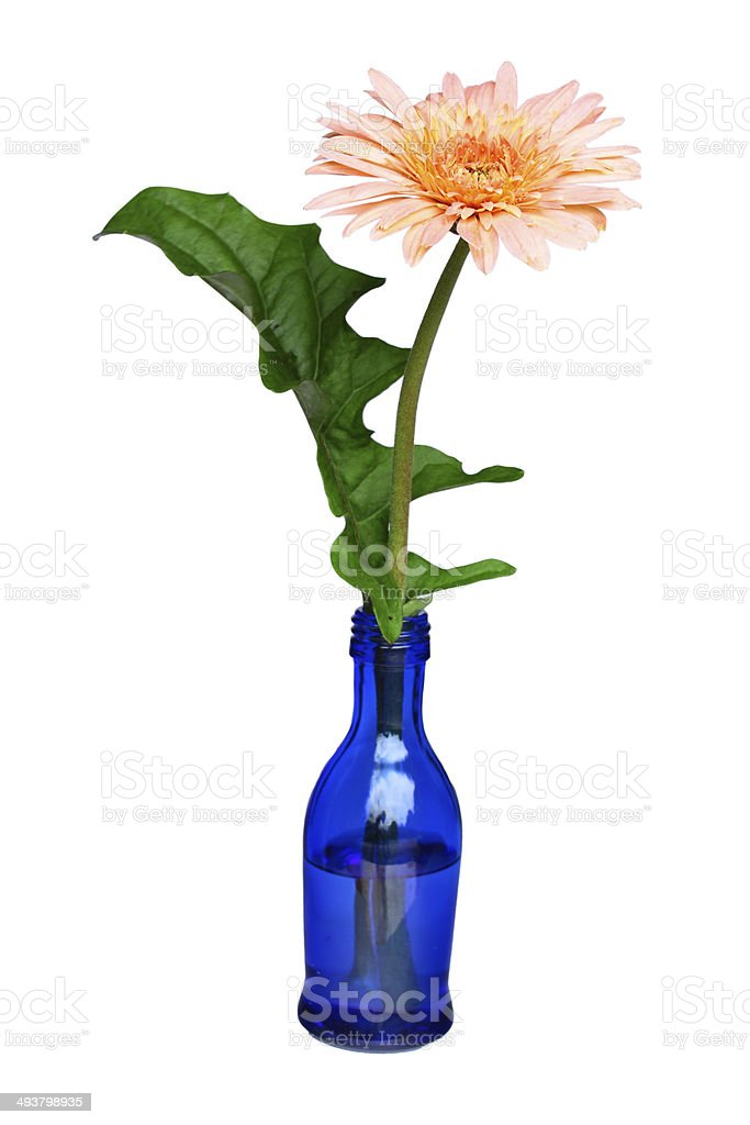 Color bottle become flowerpot for environment stock photo