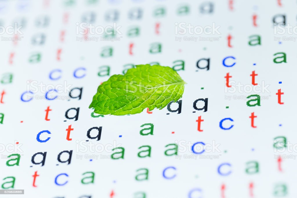 color coded DNA sequence with mint leaf stock photo
